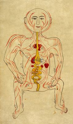 "Persian anatomical illustration of the human body showing arteries and viscera, c.18th century.    From a manuscript attributed to Shikastah-Nastaliq, this anatomical drawing is thought to be a copy of an illustration from the Tashrih bi al-Taswir, or 'Illustrated Anatomy' by Mansur (d. after 1422). The heart is shown with exaggerated auricles - small muscular pouches which protrude from the atria - which Mansur describes as ""an appendage that resembles an ear"""