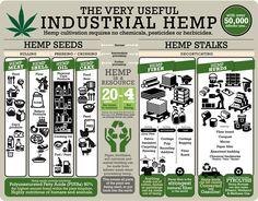 Marijuana Leaves, Industrial, Cannabis Plant, Hemp Seeds, Hemp Oil, Medical Marijuana, Cannabis News, Hydroponics, Body Care