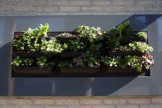 Verticale tuin– Aangelegd door TuinKeur Hovenier Nova Green Nova, Green, Plants, Flora, Plant, Planting