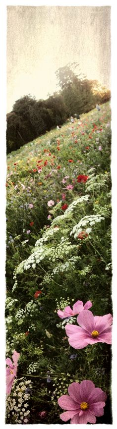 Garden Days at the Castle of Courson by kim kiwi #flowers #nature #fields