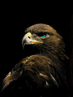 Amazing Eagle!