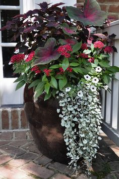 Large container: caladium, maybe a coleus, red Penta, white petunia/calabrachoa, grey Dichondra Garden Landscaping, Outdoor Shade, Shade Plants, Flower Pots Outdoor, Container Plants, Garden Containers, Plants, Potted Plants Outdoor, Outdoor Planters