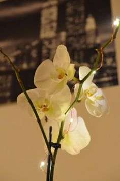 #orchid #flower #poster #newyork #aesthetics #white #fairylights #photography Henri Cartier Bresson, Pretty Good, Fairy Lights, Orchids, Aesthetics, Flowers, Plants, Poster, Photography
