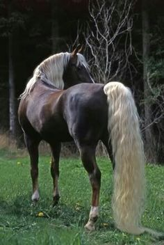 Beautiful horses take a lot of grooming. ( That means all horses) Horses And Dogs, Wild Horses, Animals And Pets, Cute Animals, Most Beautiful Horses, All The Pretty Horses, Stunningly Beautiful, Majestic Horse, Majestic Animals