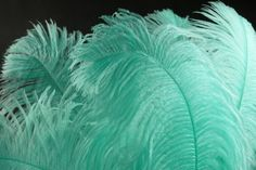 tiffany blue feathers