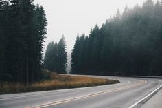 A beautiful free photo of road pavement and trees fog. This image is free for both personal and commercial use. No attribution required. Free Photos, Free Stock Photos, Free Images, Hd Photos, Photoshop Actions, Lightroom, Adobe Photoshop, Road Pavement, Free High Resolution Photos