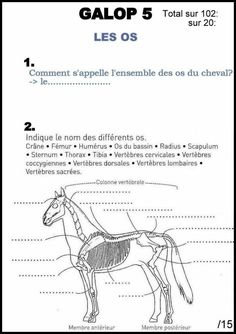 – – Art Of Equitation Questionnaire, Horses, This Or That Questions, Recherche Google, Blog, Passion, Sports, Clothes, Horse Anatomy