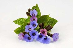 Zoznámte sa s krásnou bylinkou - Pluska. Floral, Flowers, Plants, Plant, Royal Icing Flowers, Flower, Flower, Florals, Planets