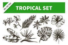 Han Drawn Tropical Plants Vector Set by Elena Pimonova on Creative Market