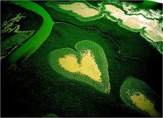multiflorafernandopolis, natureza divina coracao verde   -  Brasil