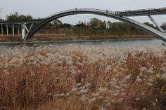 Seonyu Bridge from Yanghwa Park