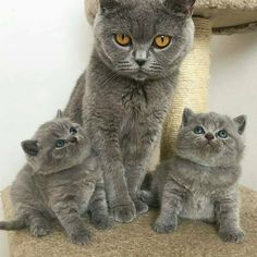 Oh wow. I want these three. Meow