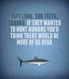 change mind, love sharks.