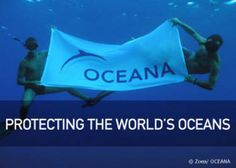 @Oceana works hard to protect our oceans: www.ocean.org