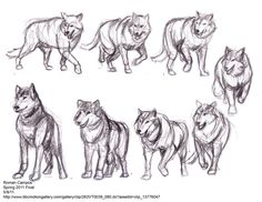 Image result for wolf poses