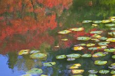 See how to bring the impressionist painter's vision to life in your own landscape with these flower choices and garden design ideas