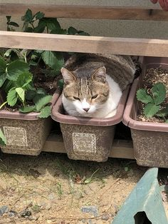 """Petit palace ( - ぷ ち 宮 さ ん の ツ イ ー ト: """"A cat is waiting for a harvest …. Tired Animals, Animals And Pets, Baby Animals, Funny Animals, Funny Cats, Crazy Cat Lady, Crazy Cats, I Love Cats, Cool Cats"""