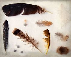 Natures Whispers Your Name Feather-Print-by-Beaneath-Northern-Skies