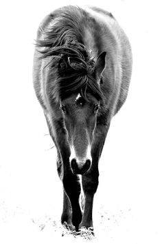 The Spirit of a Horse Photo by Kate Rice -- National Geographic Your Shot