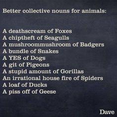 Better collective nouns