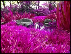 Through The Pink Grass by ~tearzdr0p on deviantART