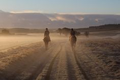 One snowy morning on the gallops with horses from Kubler Racing