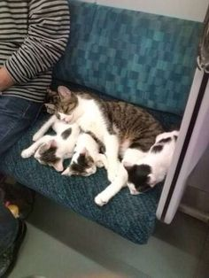 cats in the train