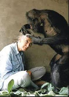Jane Goodall being groomed. I wish I knew the groomer's name.