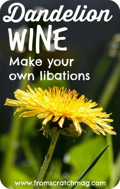 How to make Dandelion Wine