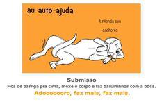 entenda_o_ que_ significa_ as_ posturas_ mais_ comuns_ dos_ cachorros_sossolteiros 9