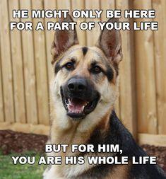 German Shepherd: A companion for life http://german-shepherd-obedience-training.com/6-reasons-to-get-a-german-shepherd/