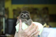 To value sloths of all natures. | The 29 Cutest Sloths That Ever Slothed