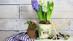 9 Ιδέες για να Διακοσμήσετε Έξυπνα τη Μικρή Βεράντα σας!  #Διακόσμηση Planter Pots, Sweet Home, Home And Garden, Gardens, Facebook, Tips, House Beautiful, Outdoor Gardens, Garden