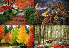 Fall aka Autumn