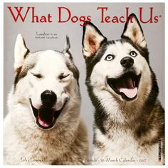What+Dogs+Teach+Us+2017+Calendar+at+The+Animal+Rescue+Site
