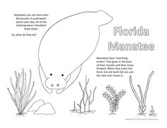 manatee coloring pages gallery photos
