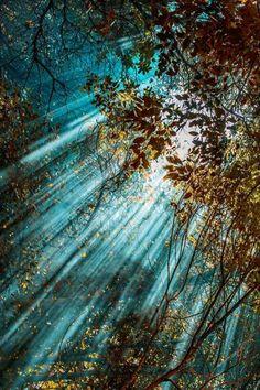 Sunlight streaming through the trees. !IEC