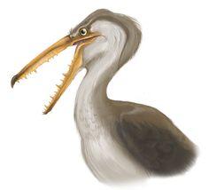 Image result for prehistoric birds
