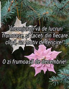 Anul Nou, Plants, Christmas, Xmas, Navidad, Plant, Noel, Natal, Kerst
