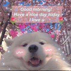 Instagram post by 💖w💖 • Jul 19, 2019 at 1:06pm UTC Memes Humor, Cat Memes, Funny Memes, Crush Memes, Memes Lindos, Heart Meme, Cute Love Memes, Relationship Memes, Wholesome Memes