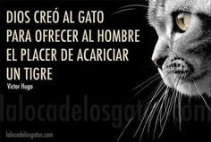 Victor Hugo about cats Victor Hugo, Crazy Cat Lady, Crazy Cats, Animals And Pets, Cute Animals, Albert Schweitzer, Chesire Cat, Gatos Cats, Mundo Animal