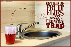 Ultimate Tricks for Getting Rid of Fruit Flies in the Bathroom - Home Quicks