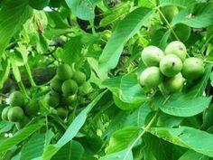 Energy Healing With Reiki - Reiki Temple Natural Forms, Natural Healing, Organic Gardening, Gardening Tips, Reiki Courses, Reiki Training, Learn Reiki, Fruit Trees, Permaculture