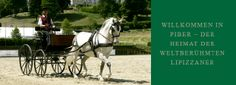 Driving carriage from Federal Stud Piber : Spanische Hofreitschule Lippizaner, Lipizzan, Spanish Riding School, Austro Hungarian, All The Pretty Horses, Horses For Sale, Austria, Equestrian, World