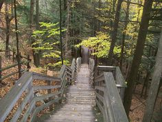 Stairs at Iargo Springs, west of Oscoda, Michigan.
