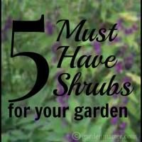 5 Must Have Shrubs for Your Garden