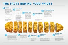 Why does food cost so much?