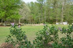 Looking from lilacs toward pond.  See bee hives to the right.  Still working on building/ designing pond area.