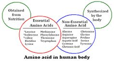 Amino Acids are the building blocks of proteins. There are twenty amino acids, among which 11 are non-essential amino acids and 9 are essential amino acids. Turmeric Black Pepper, Amino Acid Supplements, Secret Power, Complete Protein, Organic Eggs, Quorn, Vegetable Protein, Slim Fast