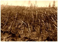 Árboles caídos en Tunguska, 1908.